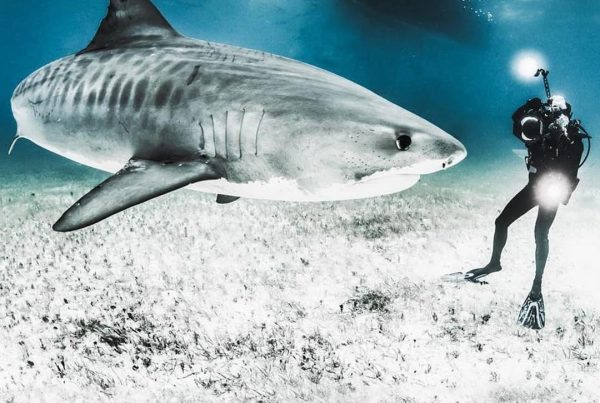 Shawn Heinrichs - Undercover and underwater