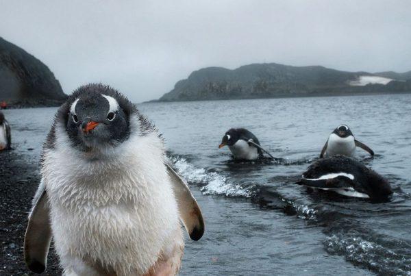 Dan Westergren - Polar Exploration