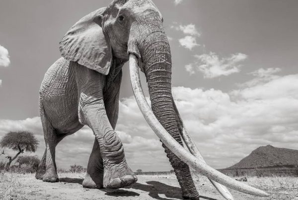 Will Burrard Lucas - land of giants