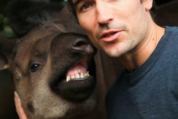 Niall Mccann - tapirs and anacondas